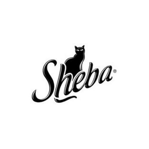 Sheba Cat