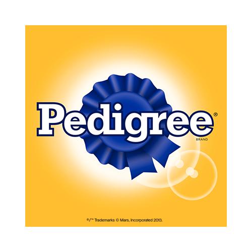Pedigree dog