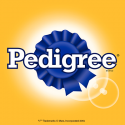 Pedigree dog
