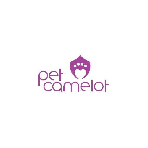 Pet Camelot dog