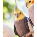 Υγιεινή Πτηνών